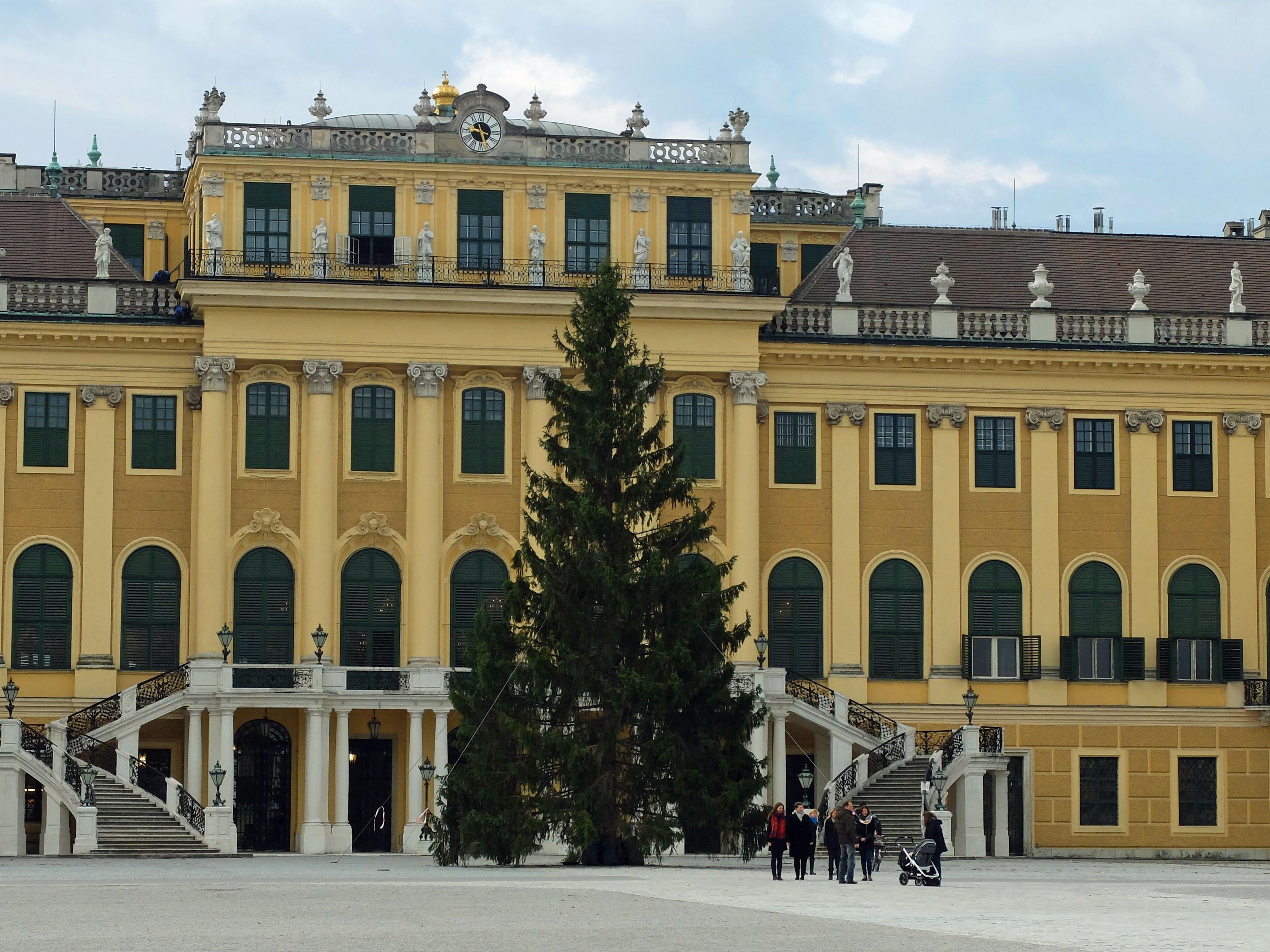 Der Christbaum für den Weihnachtsmarkt Schloss Schönbrunn ist angekommen