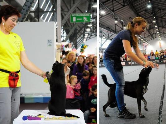 Kater Filou zeigt bei der neuen Haustiermesse sein Können, und auch auf Hundebesitzer warten viele Highlights