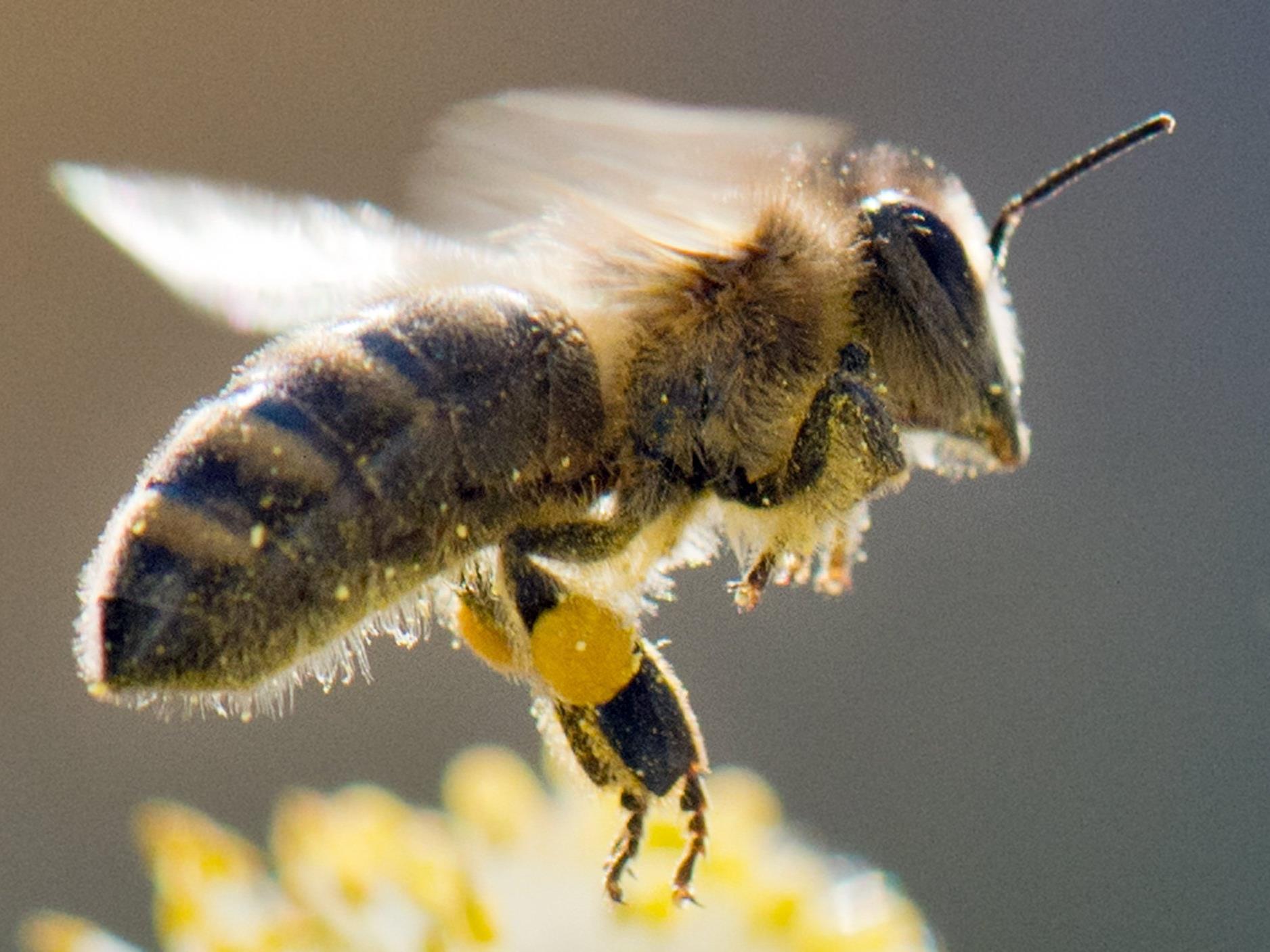 Honig ist ein echtes Allroundtalent.