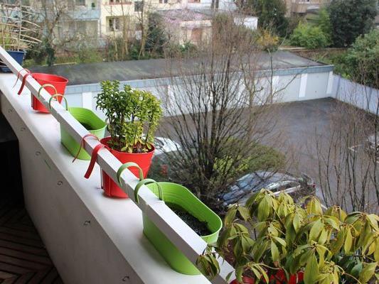 Tipps Fur Urban Gardening So Machen Sie Balkon Und Topfpflanzen