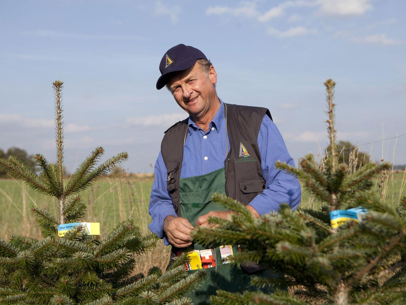 Franz Raith, Obmann ARGE NÖ Christbaumbauern, wählt die Bäume für den Verkauf aus