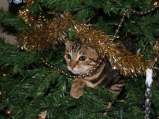 Für Katzen und Hunde kann der Christbaum zur tödlichen Falle werden.