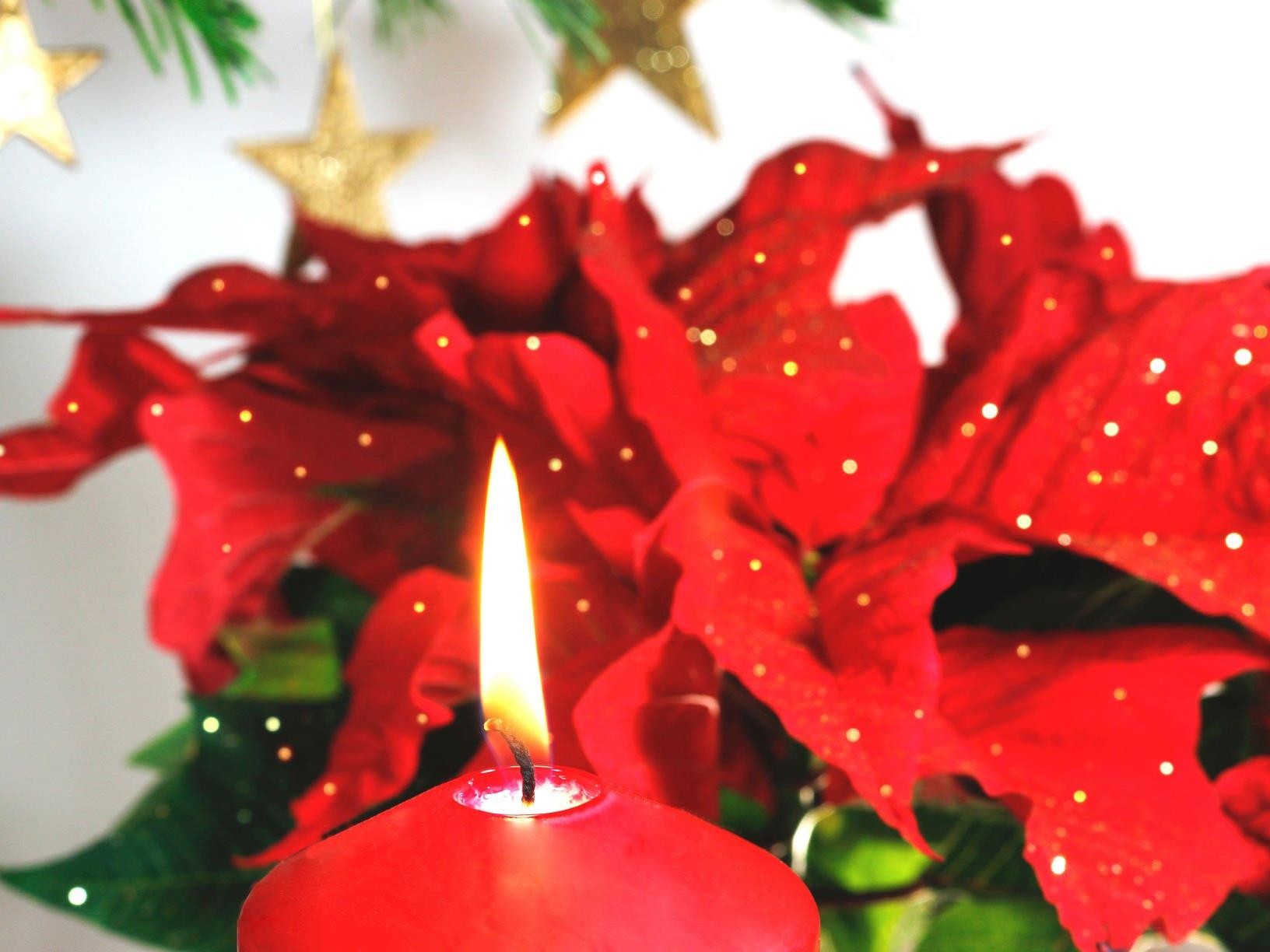 Weihnachtssterne zaubern festliche Stimmung in jedes Zuhause