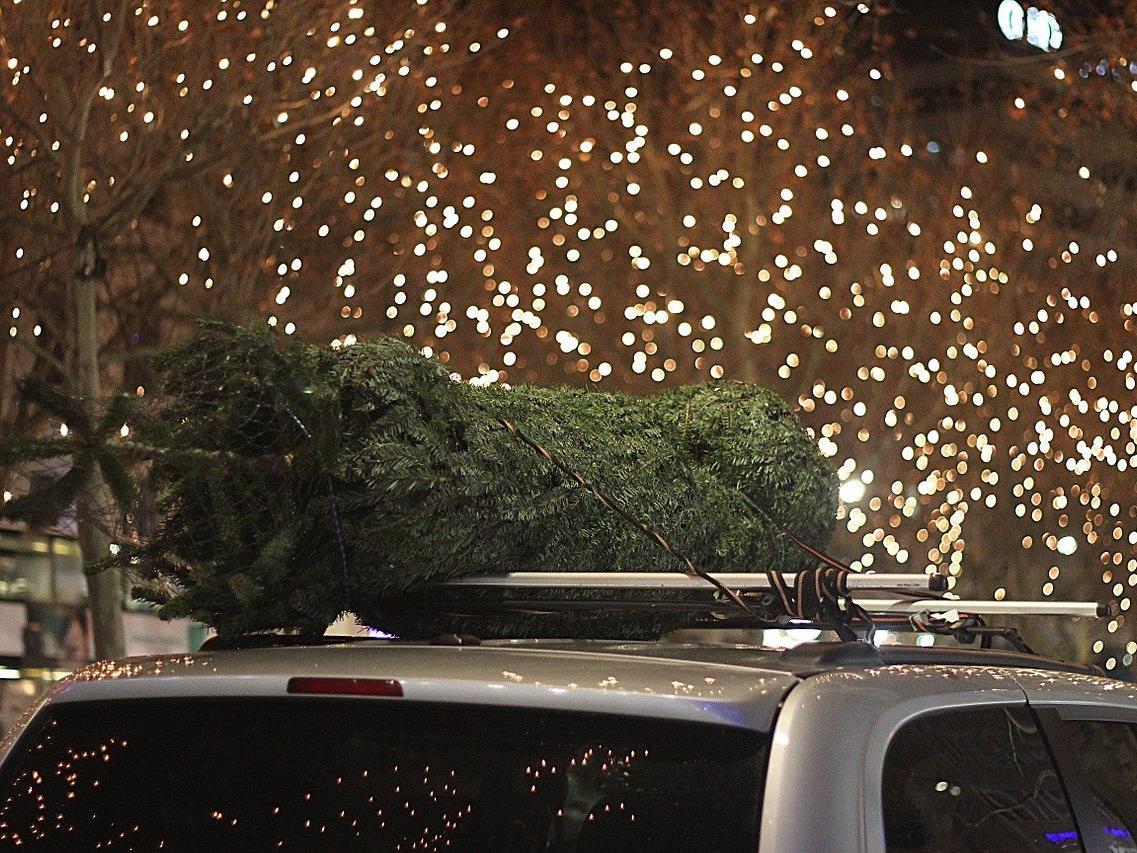 Vorsicht beim Transport des Christbaums.