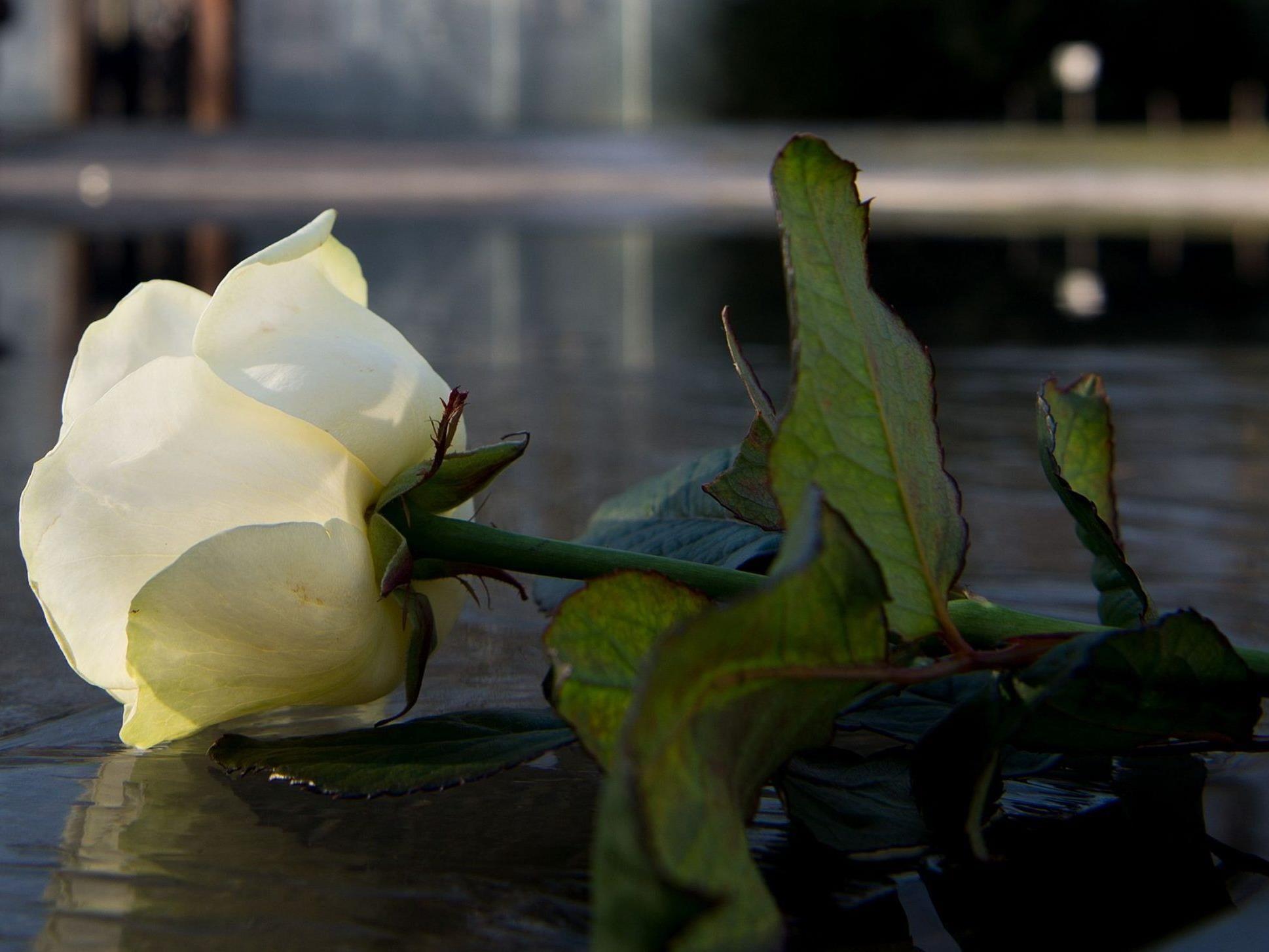 Am 27. Jänner ist der Holocaust-Gedenktag
