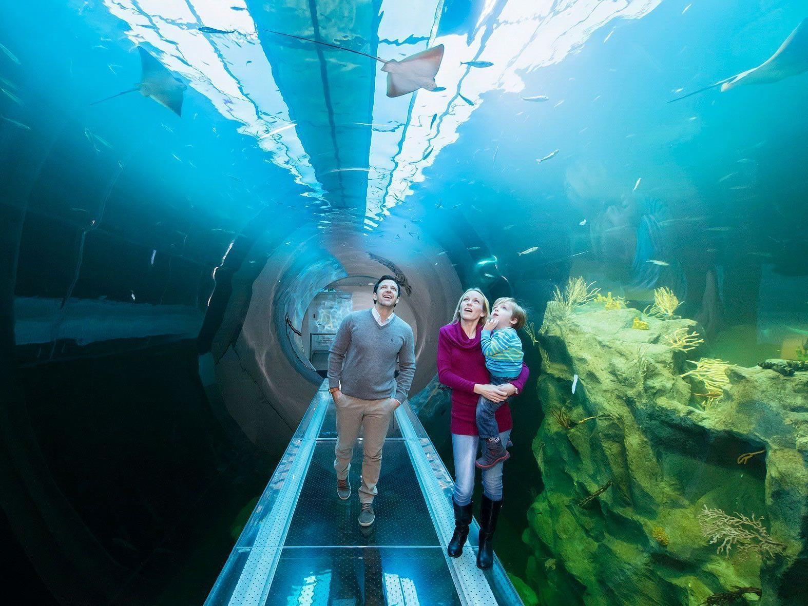 Der Atlantik-Tunnel im Haus des Meeres ist einer der Besuchermagneten