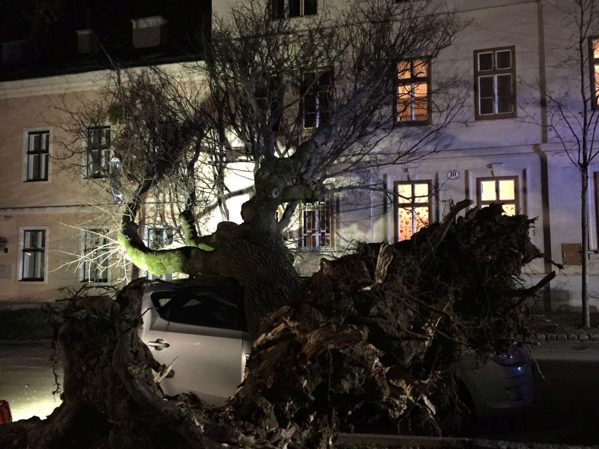 Der umgestürzte Baum in Wien-Ottakring.