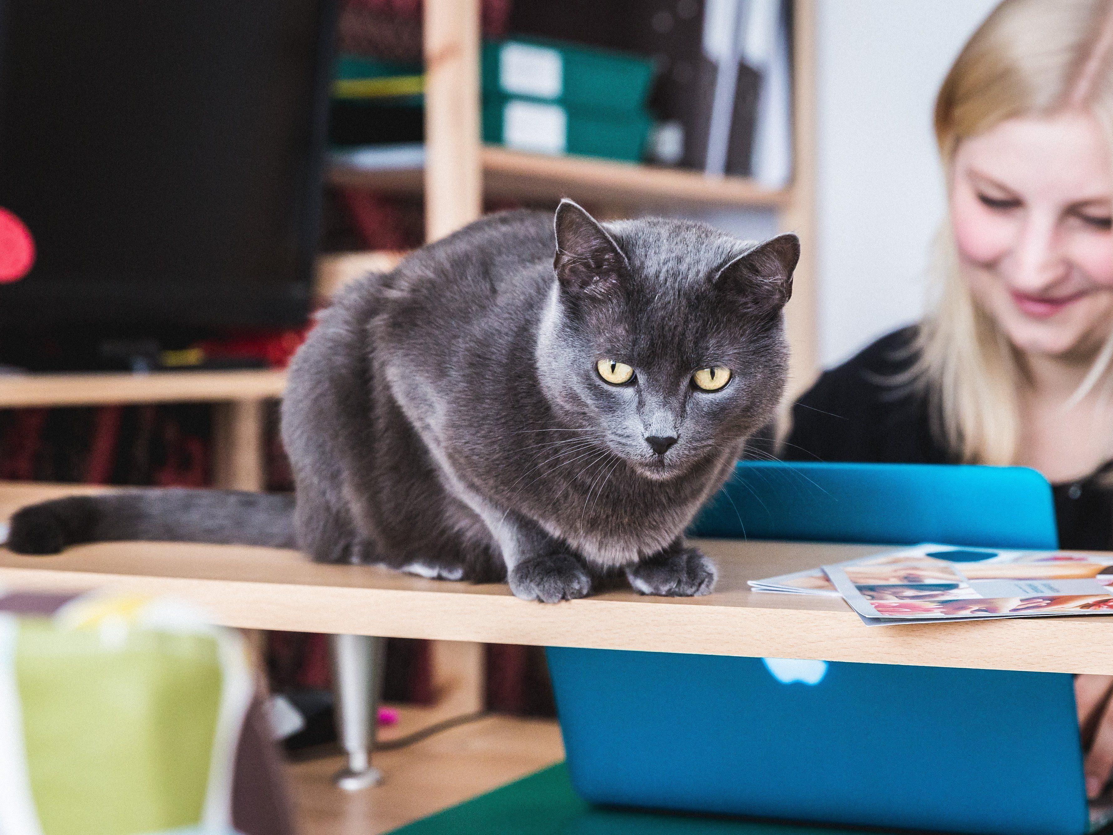 Eine der Praxiskatzen im Einsatz