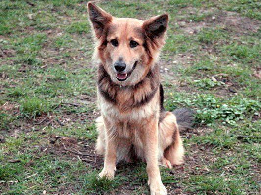 Ein Hund starb an dem in Döbling ausgelegten Giftköder