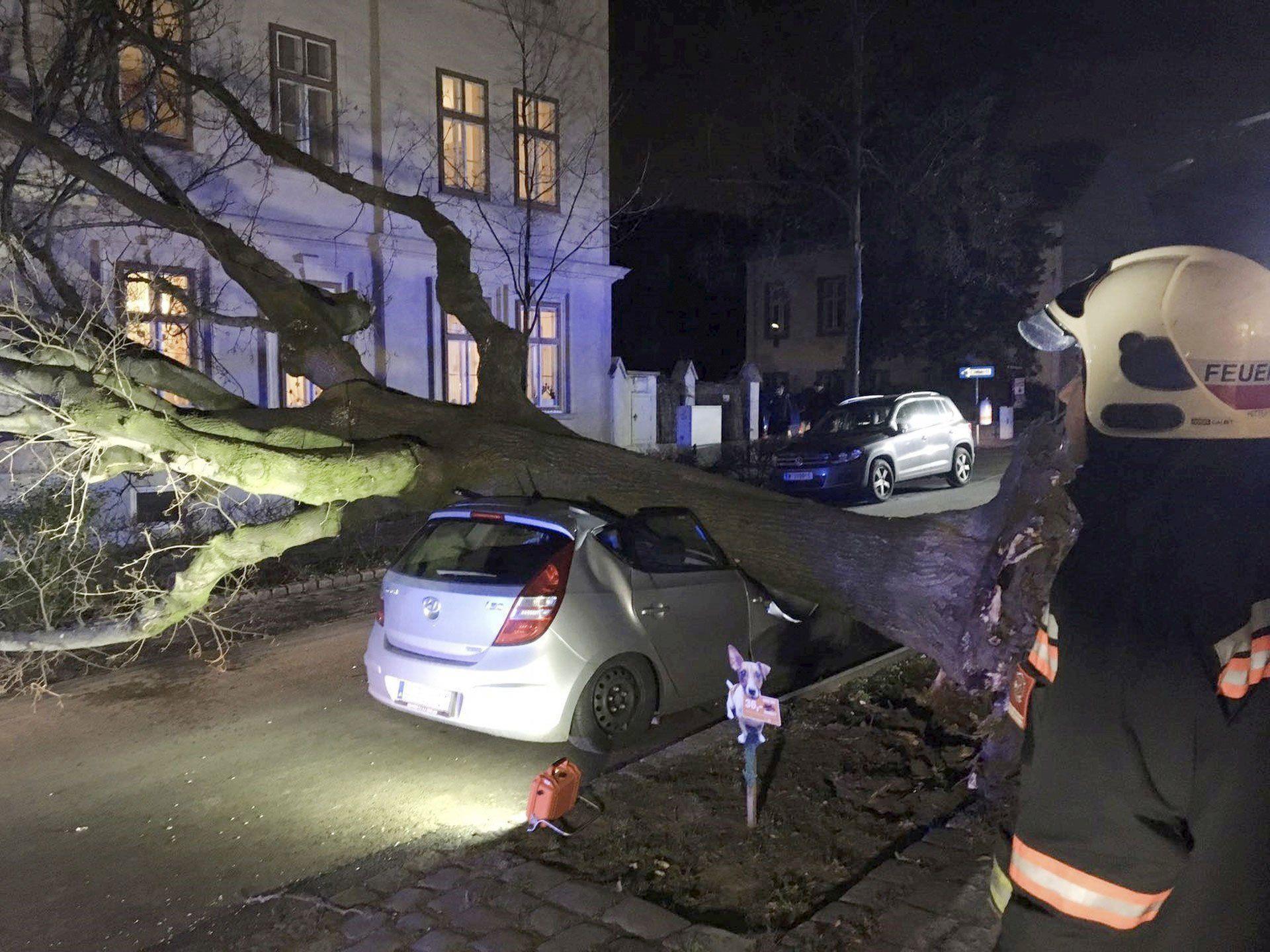 Unterhalb der Jubiläumswarte in Wien-Ottakring fällte der Sturm einen Baum