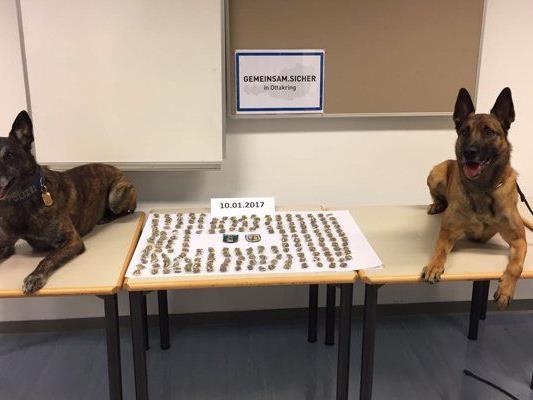 Die Polizeidiensthunde Van Helsing Duivelsbos (links) und Yoda vom Heustadlwasser (rechts) halfen bei der Schwerpunktaktion.