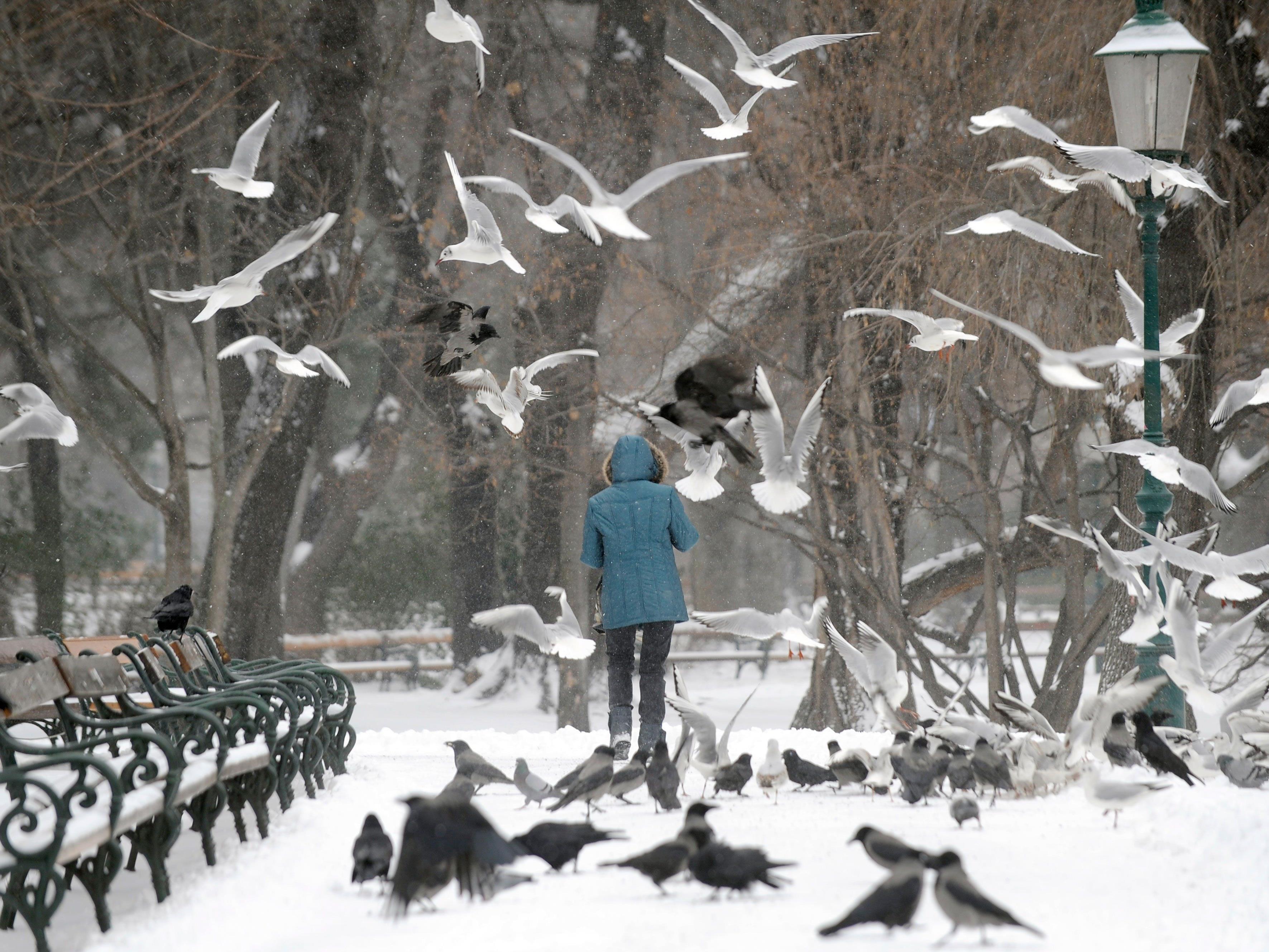 Neues Jahr beginnt winterlich - mit Schnee bis ins Flachland