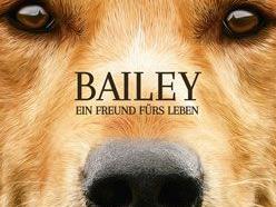 Bailey Ein Freund Fürs Leben Trailer Und Kritik Zum Film