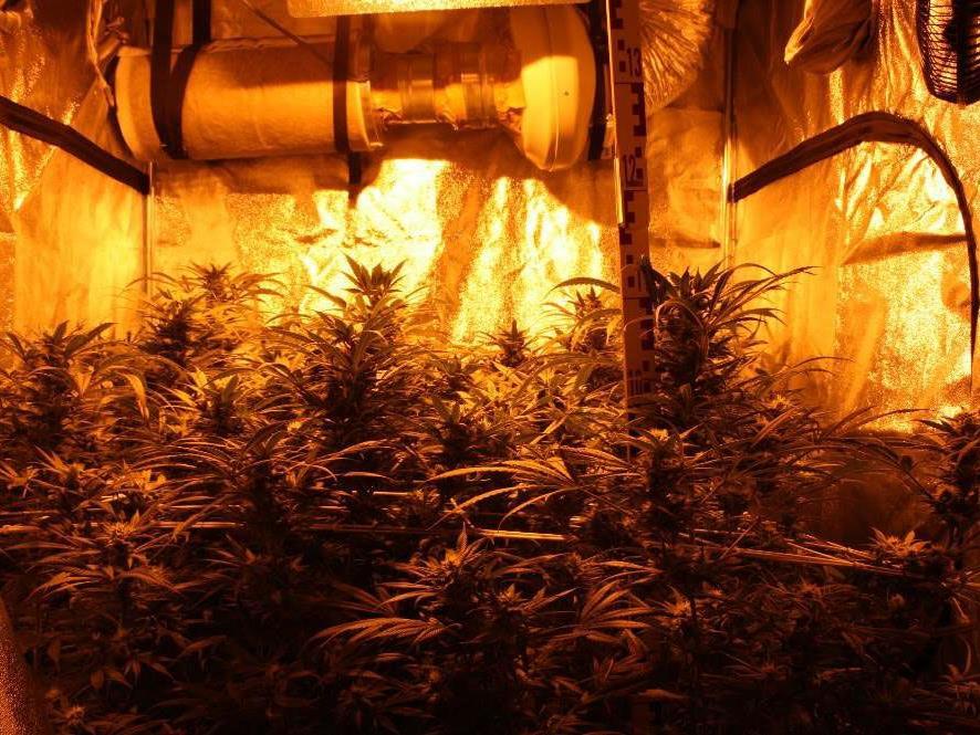 Diese Cannabisplantage wurde entdeckt