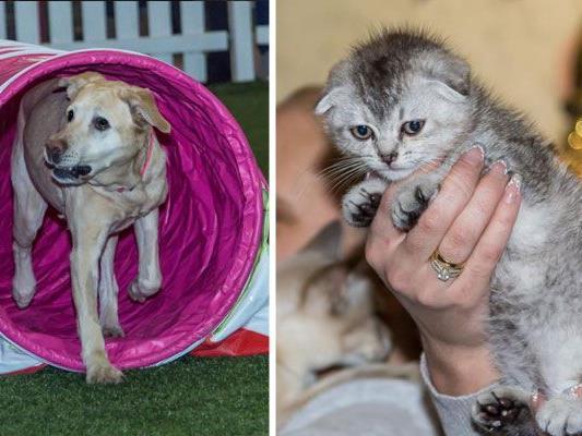 Bei der Haustiermesse gab es einiges zu erleben