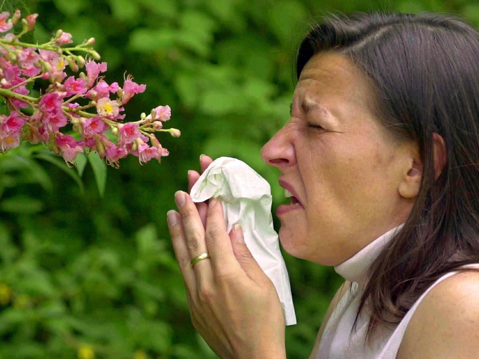 Pollen machen Allergikern bereits im Februar zu schaffen