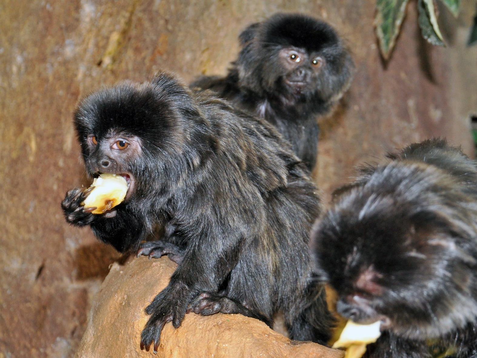 Die Affen sind los im Haus des Meeres!