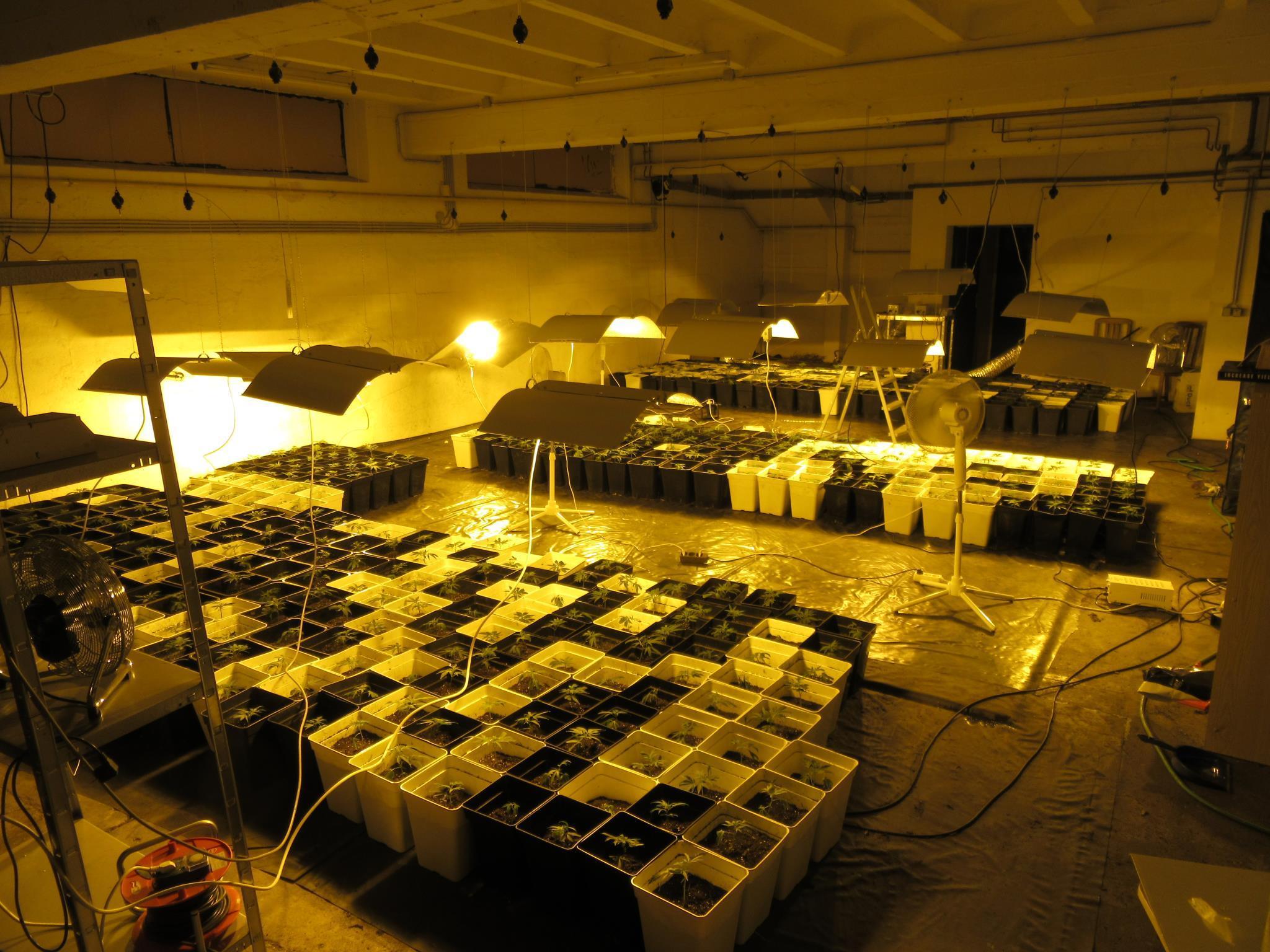 Rund 600 Cannabispflanzen waren in der Lagerhalle in Korneuburg zu finden.
