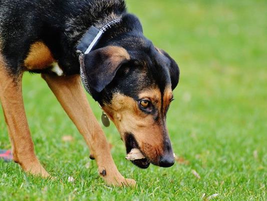 In Wien kam es erneut zu Giftköder-Attacken auf Hunde.