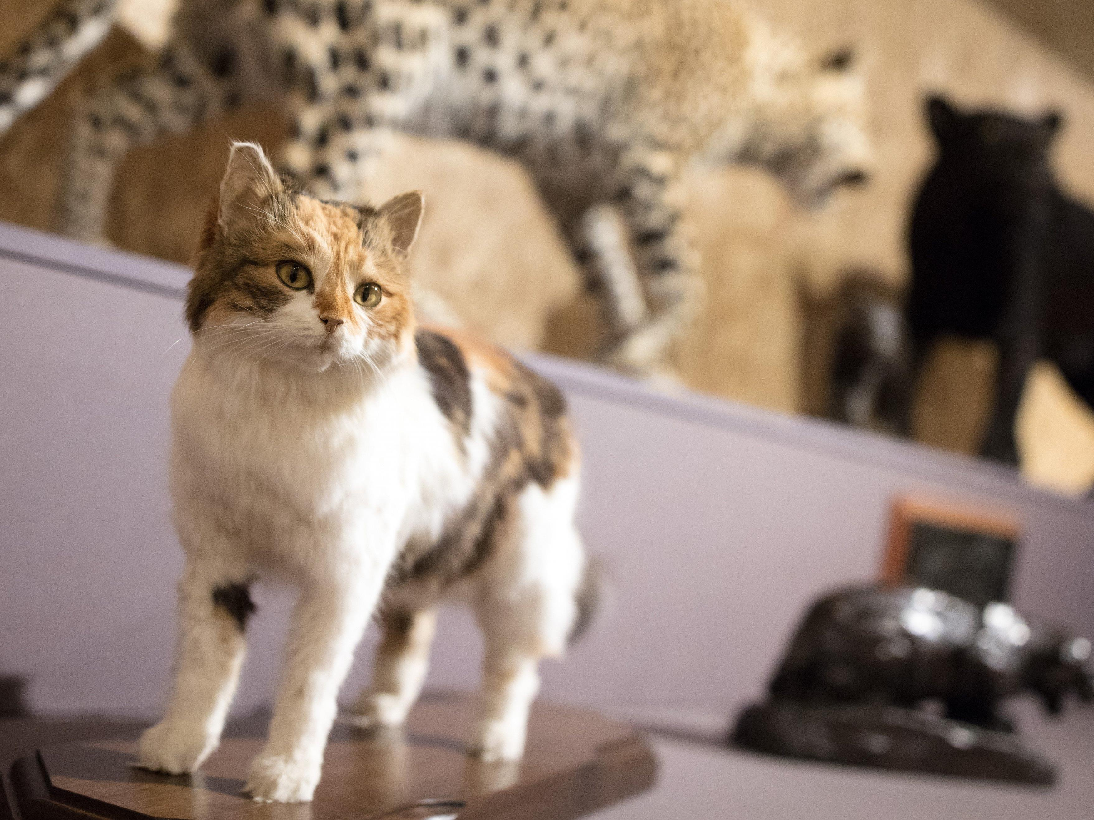 """Exponate der Ausstellung """"Katzenkorb & Löwengrube - Natur und Kunst von Cranach bis Klimt"""" im Naturhistorischen Museum (NHM) in Wien"""
