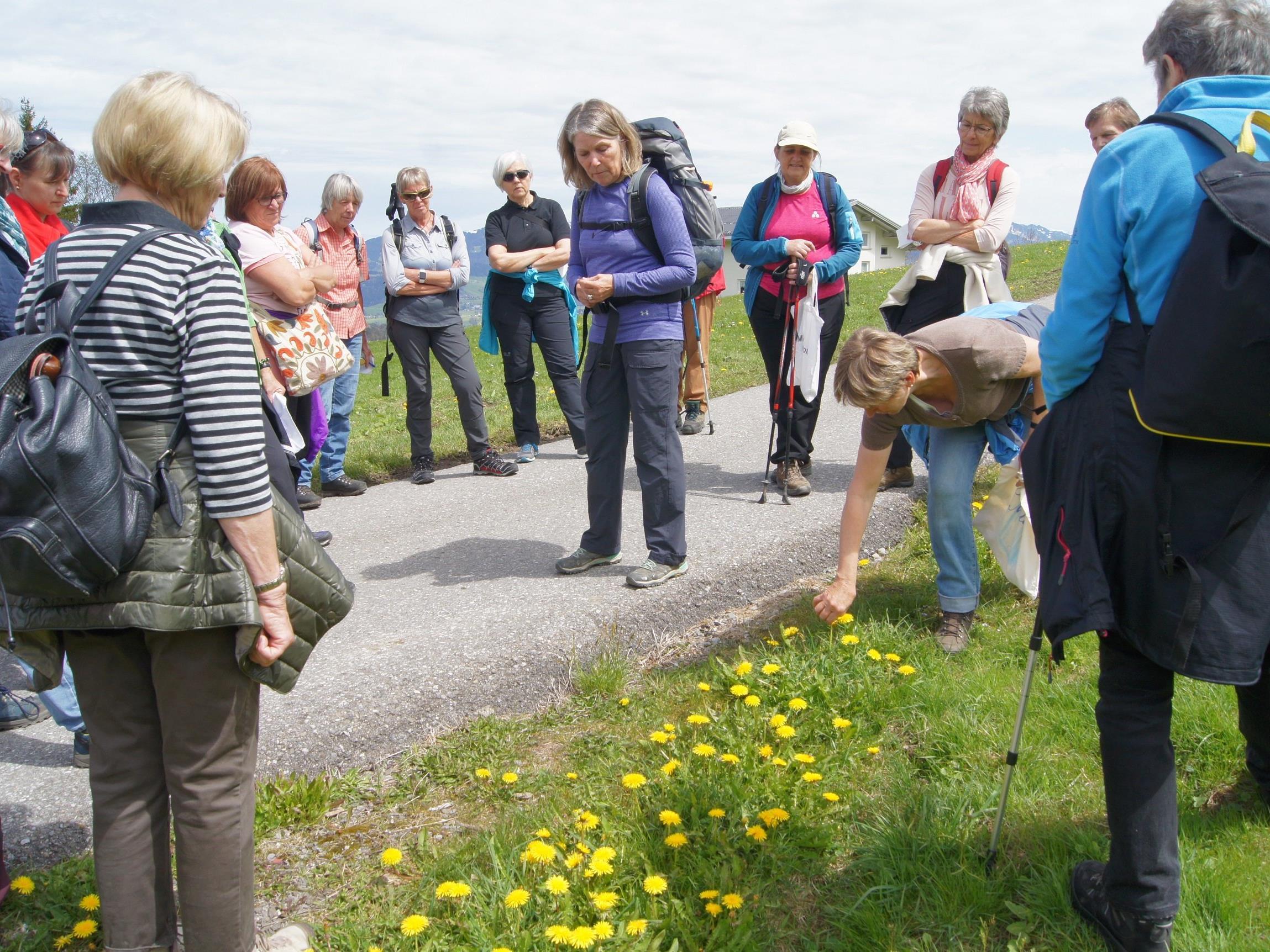 Bei der Frühjahrs-Kräuterwanderung gab Margit Keller vom Kneipp Aktiv Club Dornbirn wertvolle Anregungen.