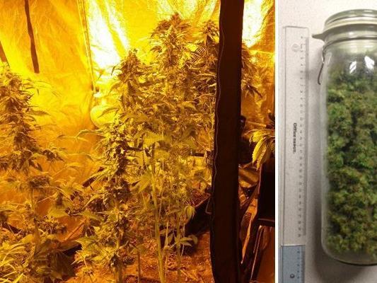 In einer Wohnung in Liesing wurde die Marihuana-Aufzuchtanlage sichergestellt.