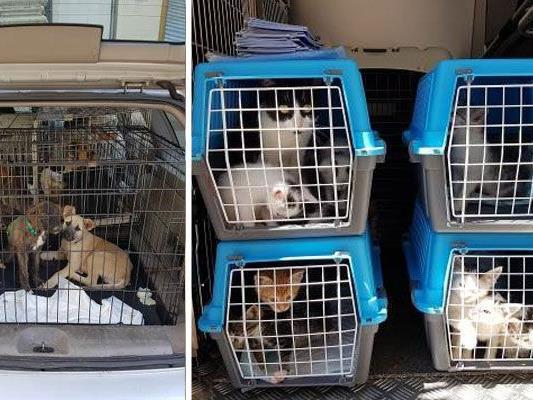 All diese Katzen und Hunde waren auf engstem Raum eingepfercht