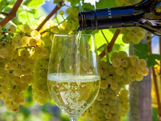 Die Finalisten des Wiener Weinpreises stehen fest.