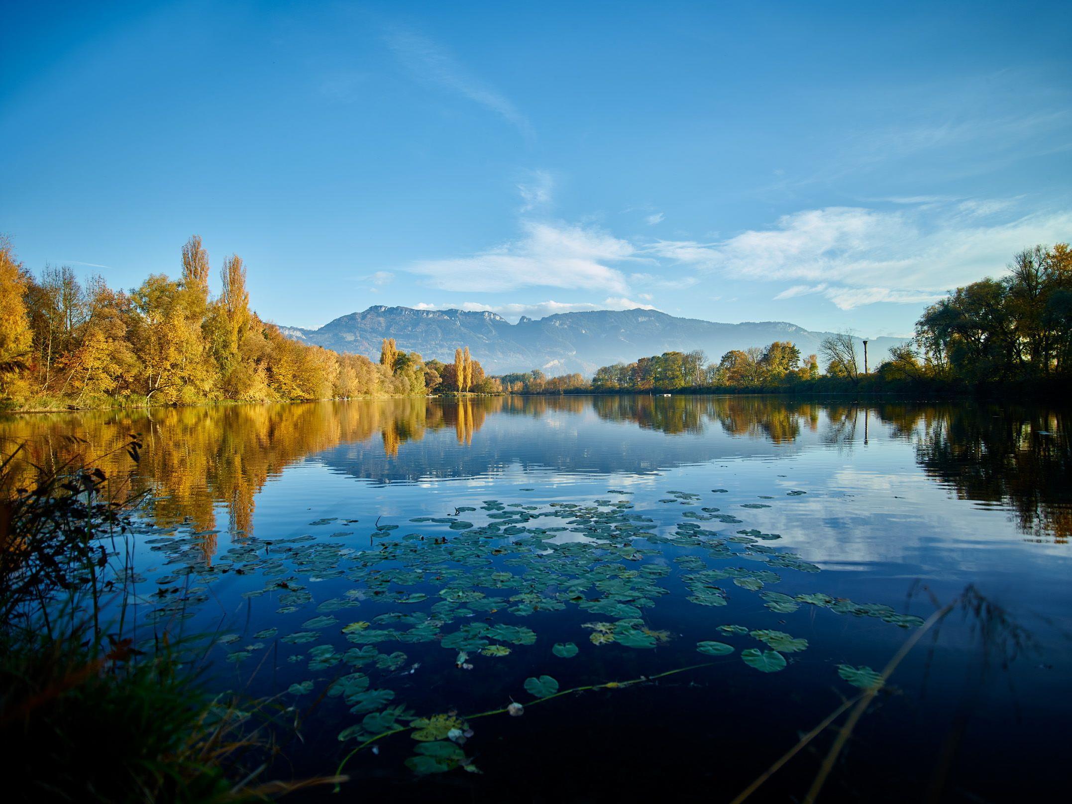 Der Naturpark Alter Rhein ist ein Juwel für Mensch, Fauna und Flora.