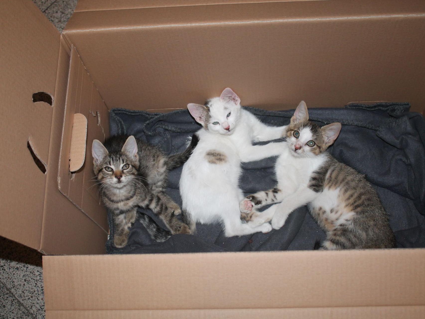 In diesem Karton setzten unbekannte Täter die Kitten aus