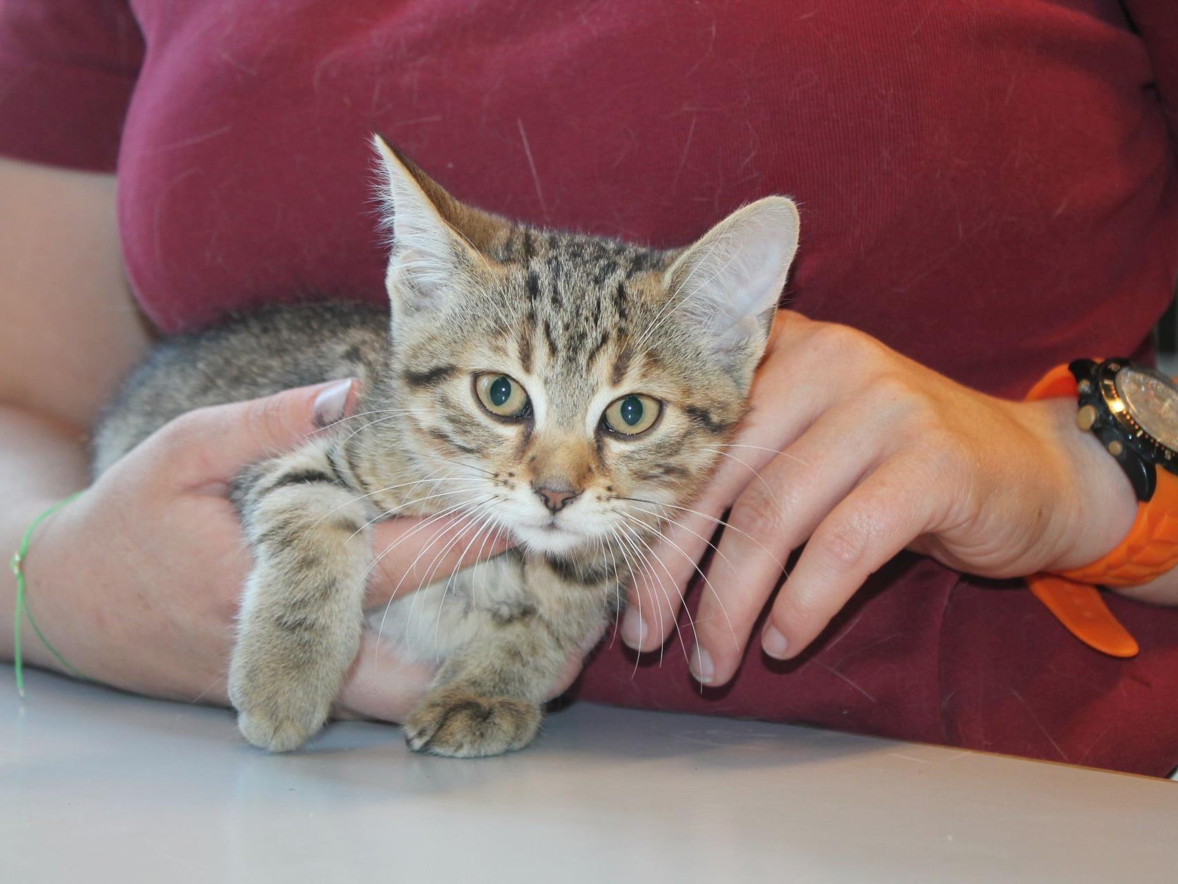Eines der ausgesetzten Kätzchen