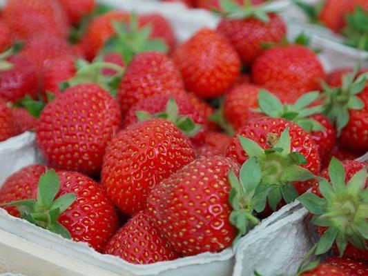 Die grünen Blätter der Erdbeeren sind laut einer Studie sehr gesund.