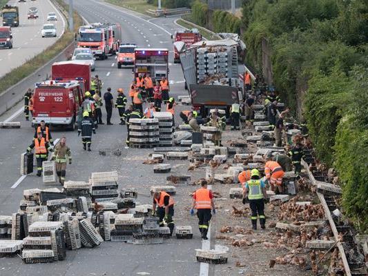Tausende Hühner befanden sich nach dem Unfall auf der Westautobahn.