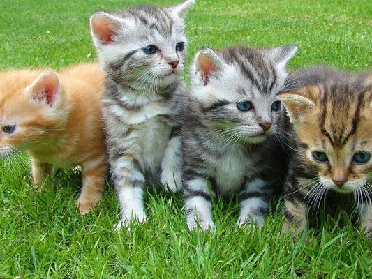 In der warmen Jahreszeit werden zahlreiche Kätzchen geboren - deren Vermittlung nun erschwert ist