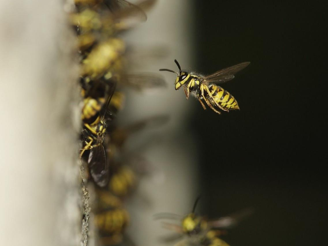 Nützliche Tipps nach Insektenstichen und Schlangenbissen.