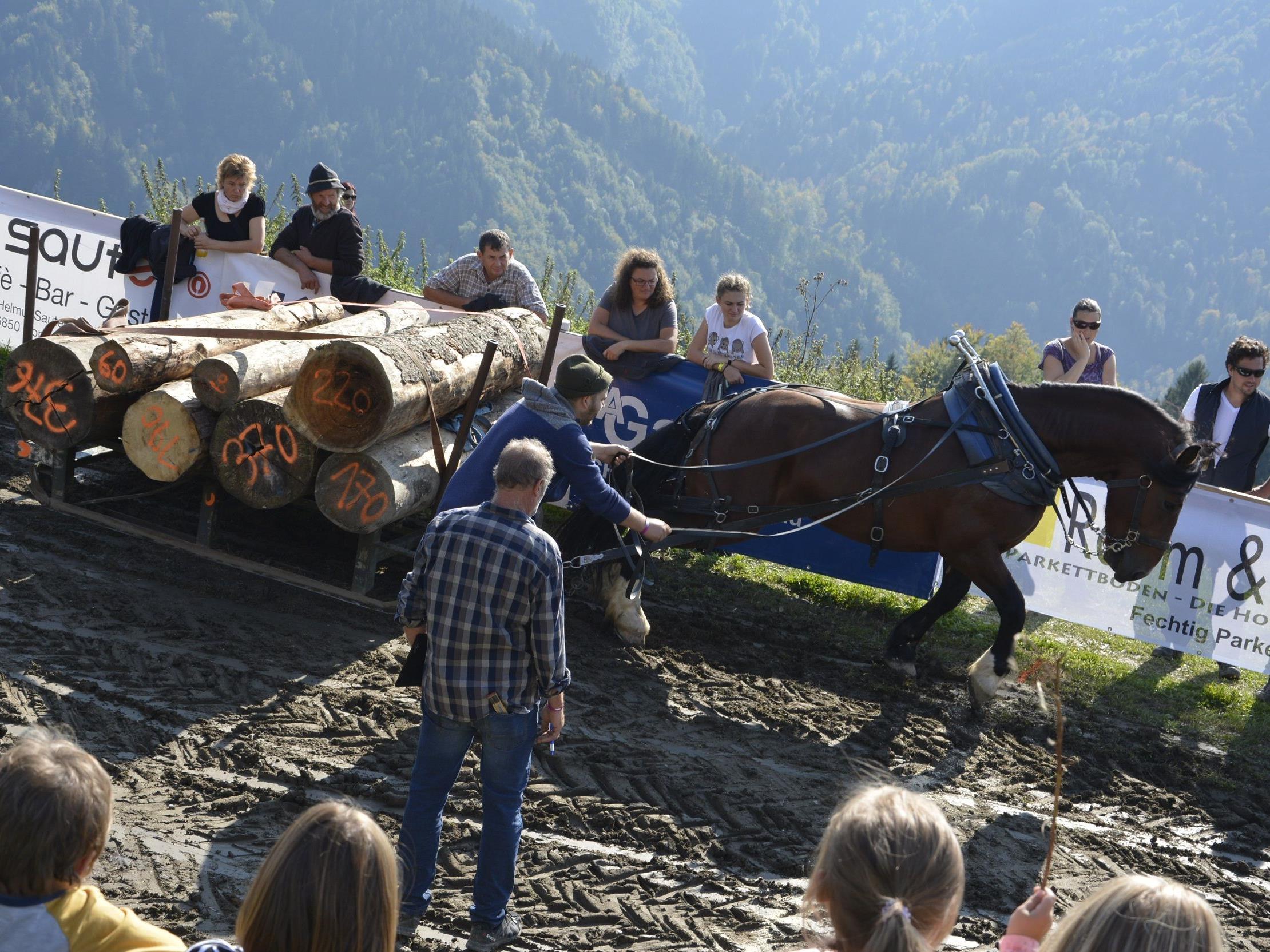 Über 60 Pferde stellten sich auf der Alpe Büla einem Kräftemessen.